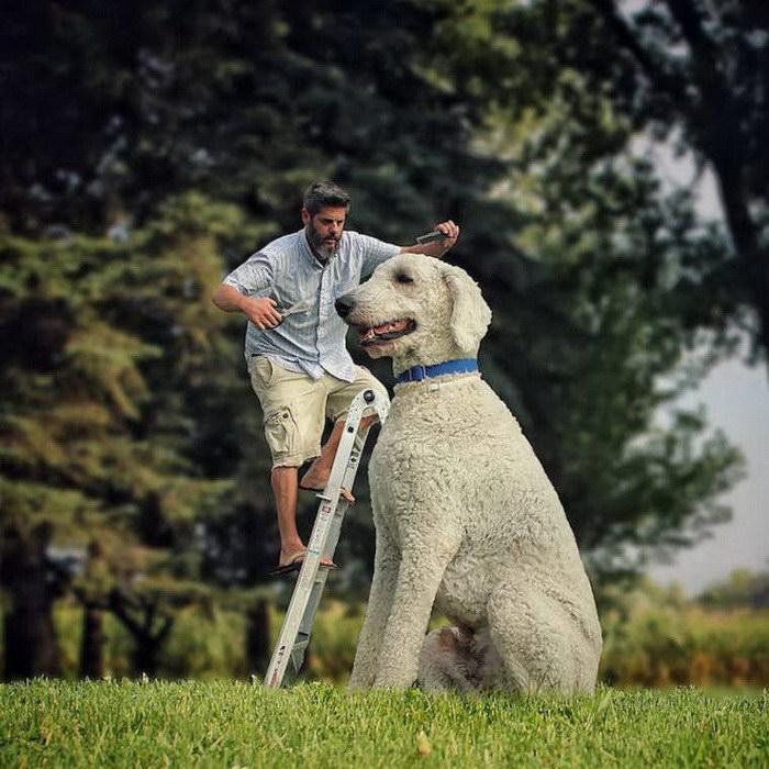 Christopher Cline и его гигантская собака