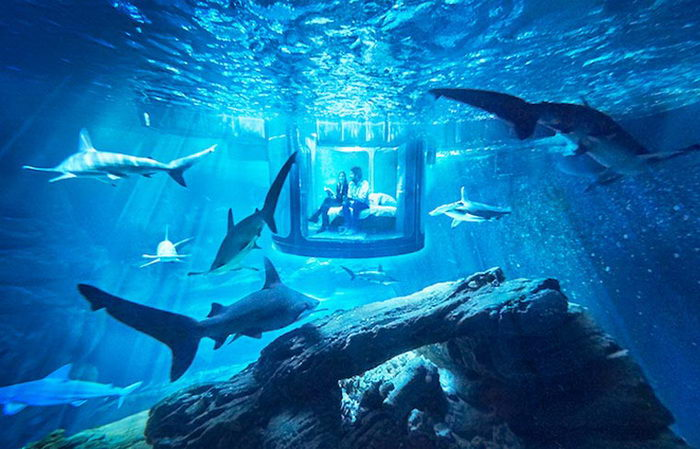 Подводный номер отеля в Париже: проведите ночь с акулами