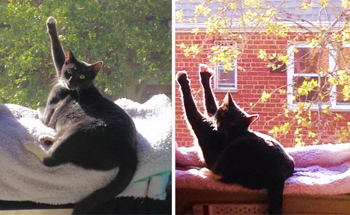24 фотографии кошек, которые нашли идеальное теплое место