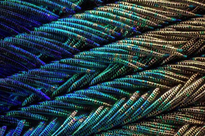 Как выглядят перышки павлина под микроскопом