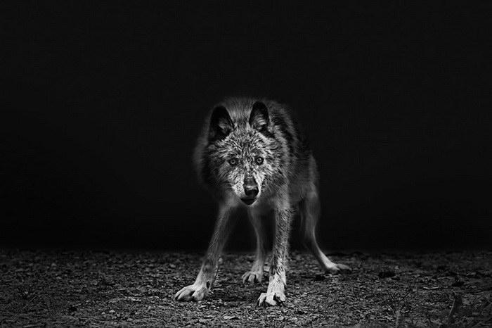 Мрачные фото животных Troy Moth