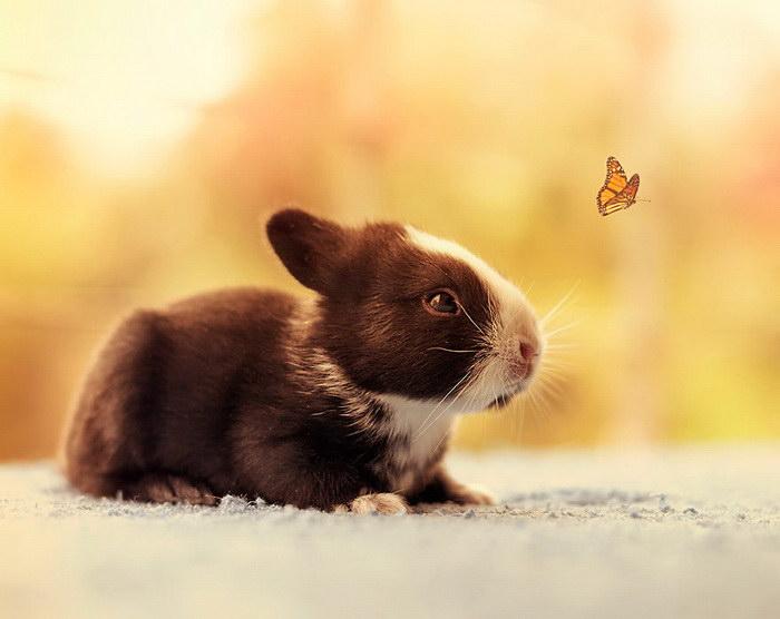 Первый месяц из жизни домашних кроликов