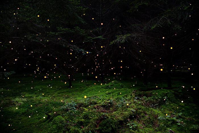 Лесные пейзажи Ellie Davies