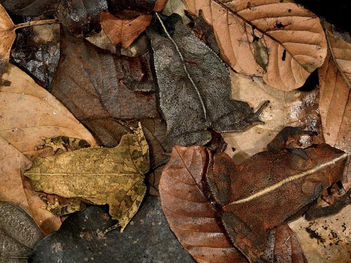 10 самых необычных лягушек на планете
