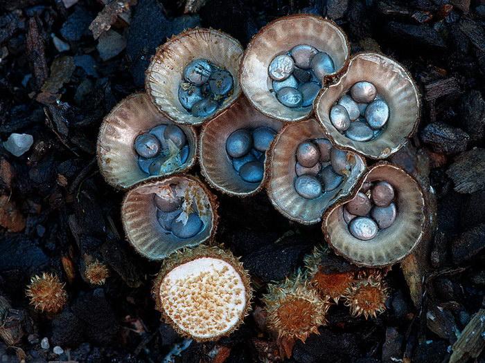 Грибы Австралии в фотографиях Steve Axford