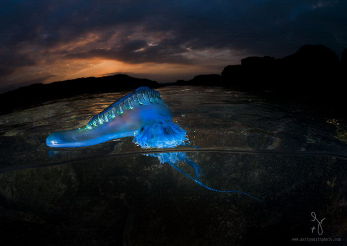 Жители океана в фотографиях Matty Smith
