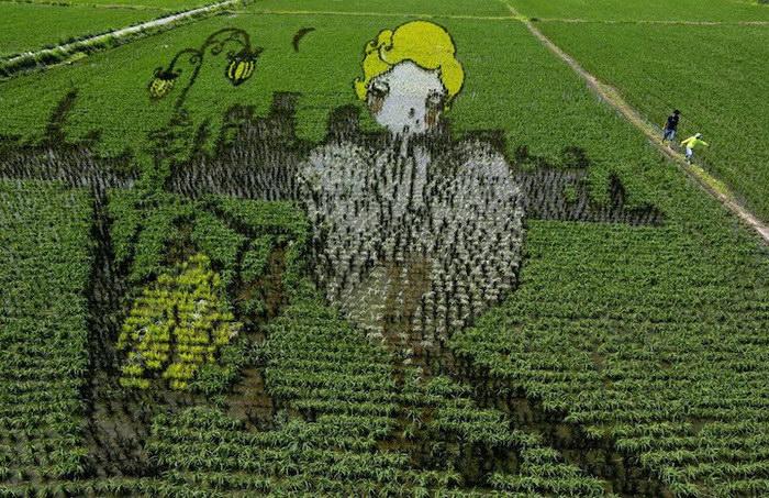 3D-рисунки на полях в Китае