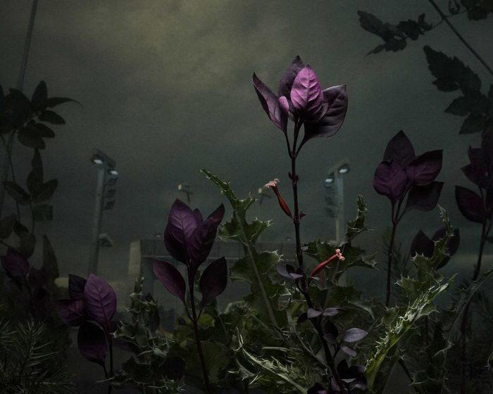 Необычные фотографии растений Daniel Shipp