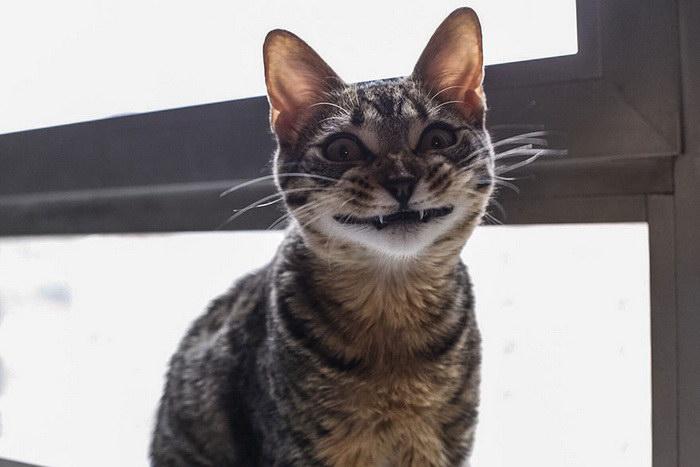 Самые счастливые кошки на Земле: фотоподборка