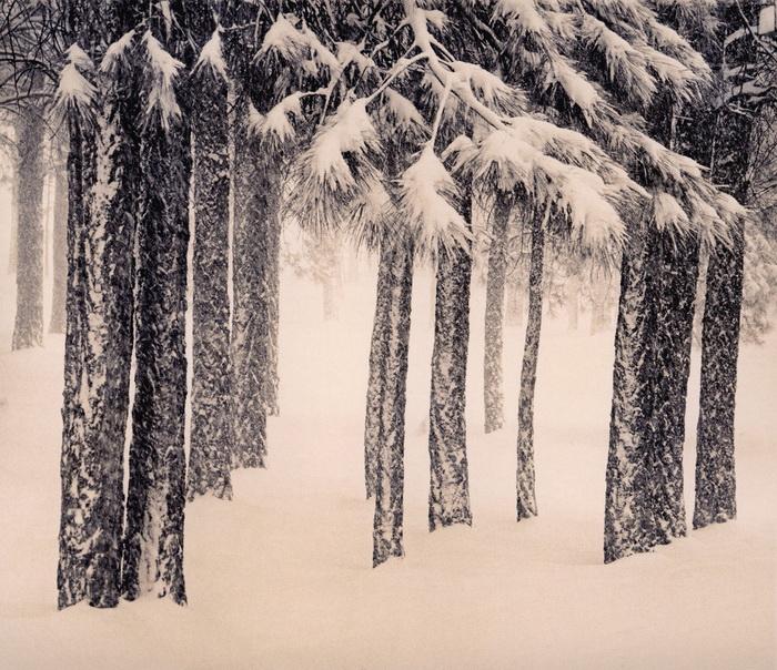 Портреты деревьев Paul Kozal