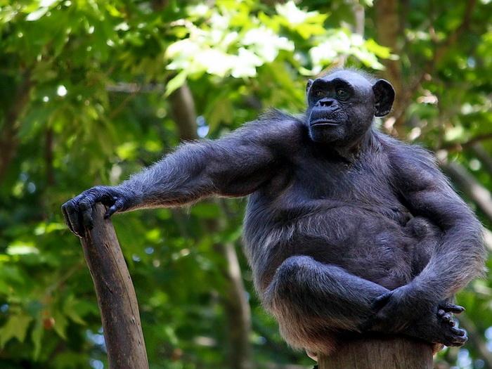 Самые умные животных на планете: фото и видео