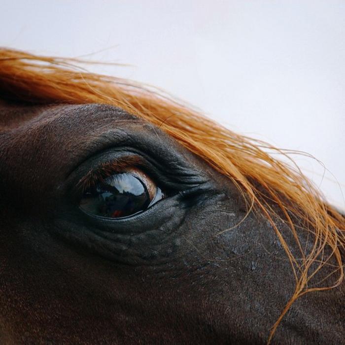 Лошади в фотографиях Linda Heidema