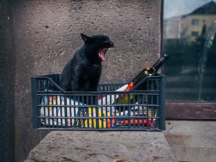 Городские кошки в фотографиях Hajdu Tam?s