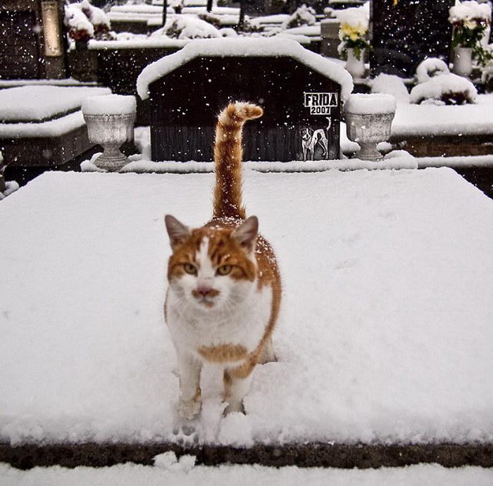Городские кошки в фотографиях Hajdu Tamás