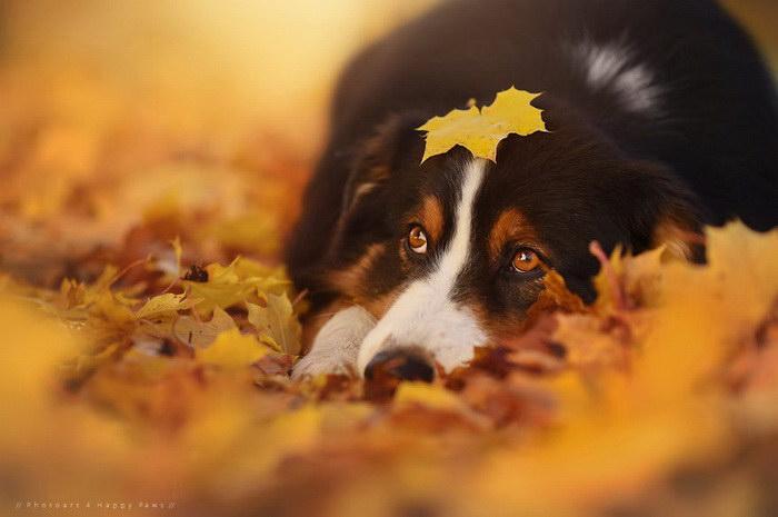 Собаки в фотографиях Anne Geier