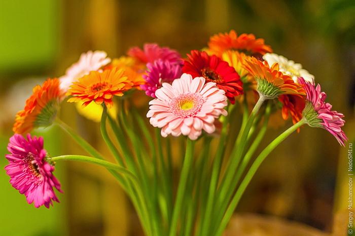 лучшие фото цветов.