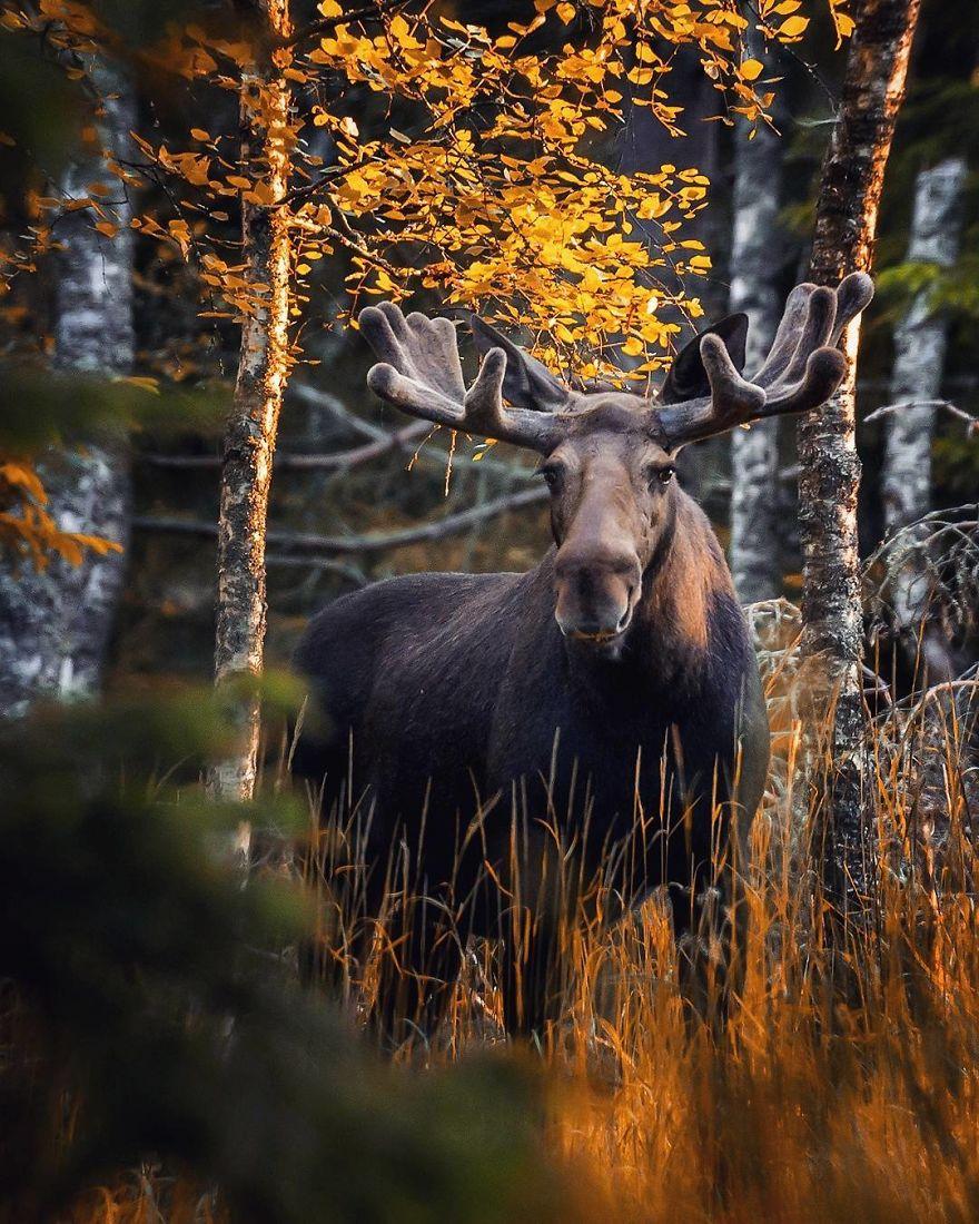 Фантастический финский лес в снимках Ossi Saarinen