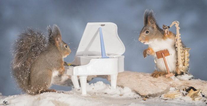 Белки-музыканты в фотографиях Geert Weggen