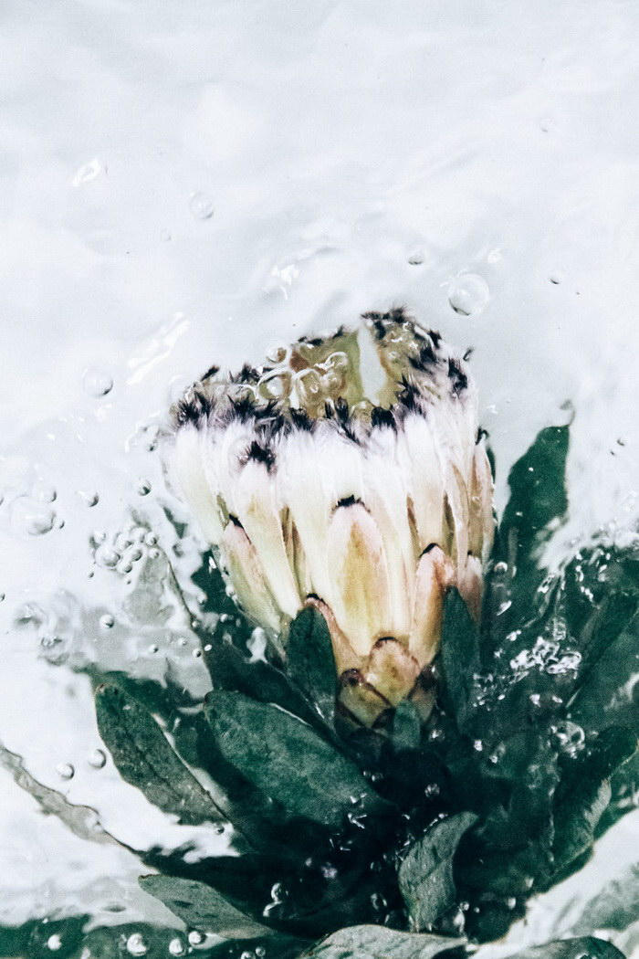 Подводные цветы в фотографиях Lisa Sorgini