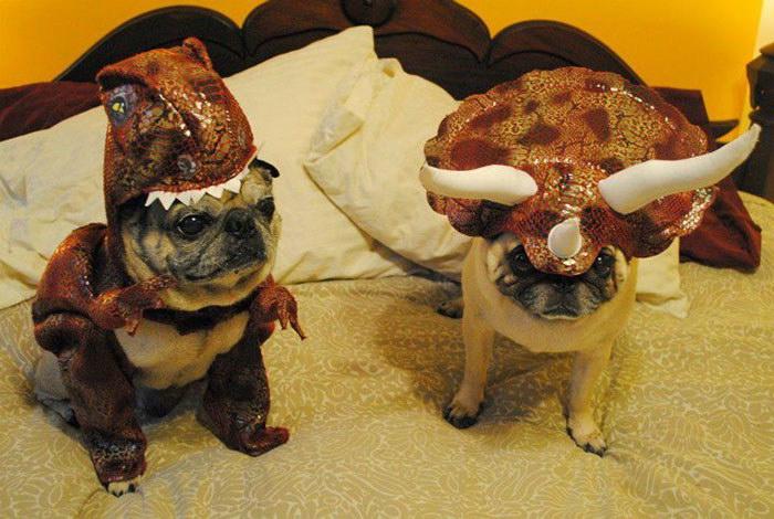Костюм динозавра для вашей собачки