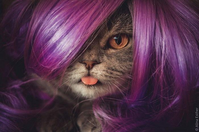 Кошка по имени Мелисса, которая постоянно высовывает язык