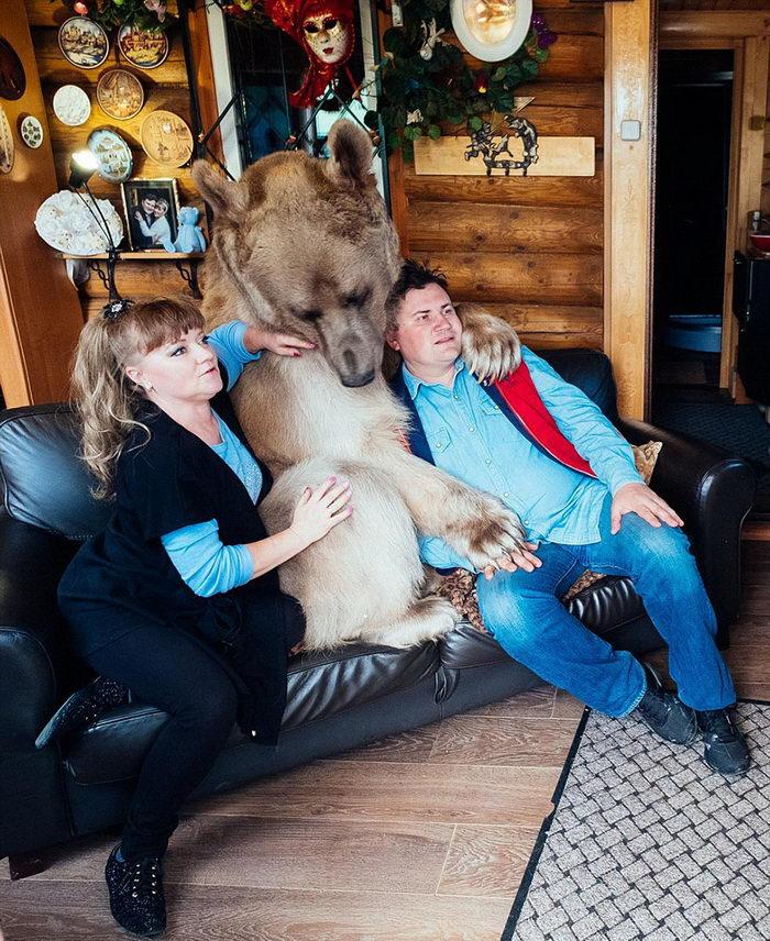 Медведь в качестве домашнего животного