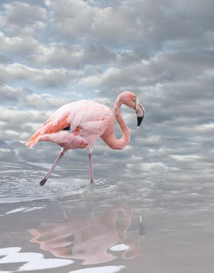 Коллажи с птицами Cheryl Medow