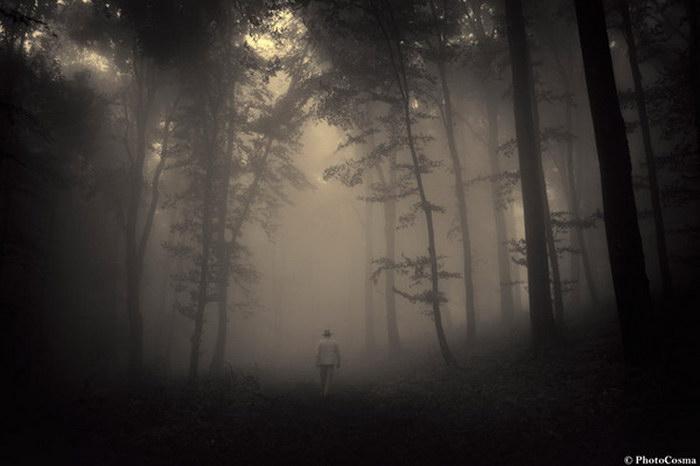 Мистика леса Трансильвании