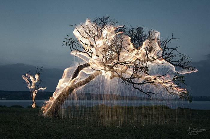 Подсвеченные деревья в фотографиях Vitor Schietti