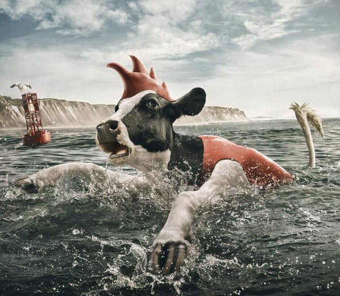 Деловые коровы: фотоработы Andy Mahr