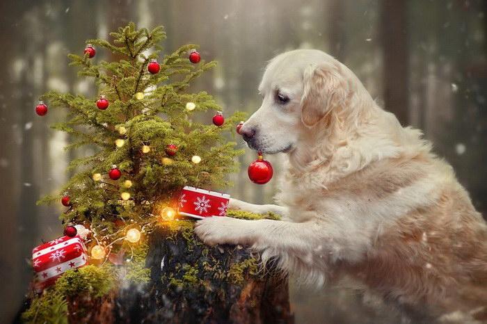 Рождественские собачки в фотографиях Gabi Stickler