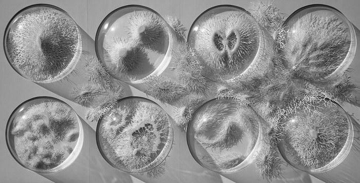 Бумажные микроорганизмы в работах Rogan Brown