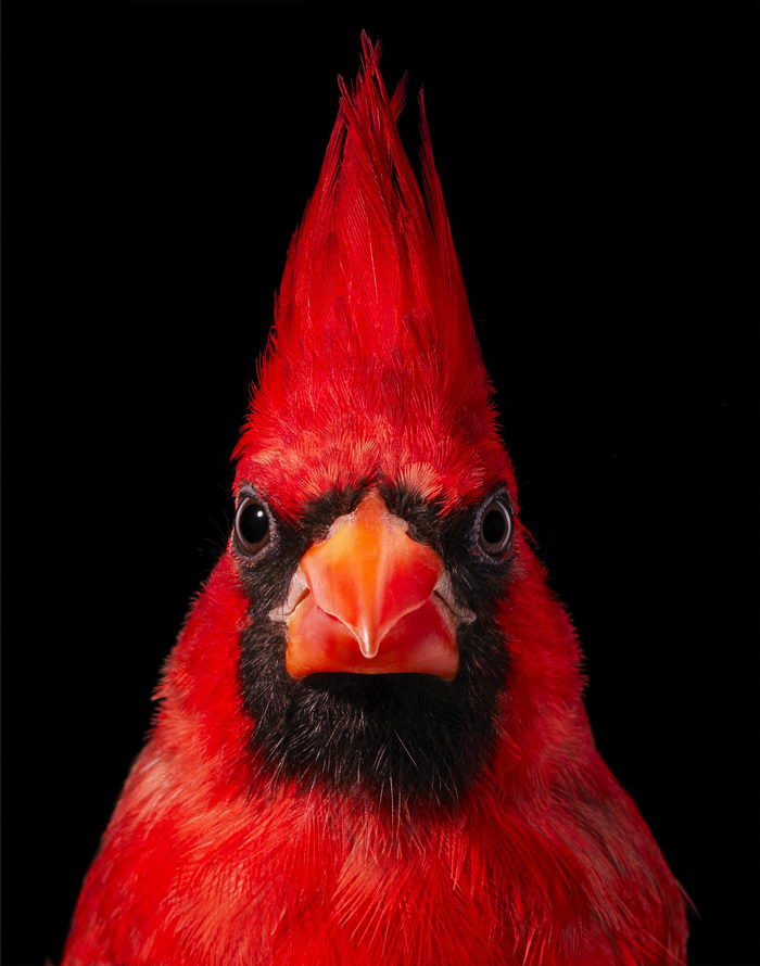 Красивые птицы в снимках Tim Flach