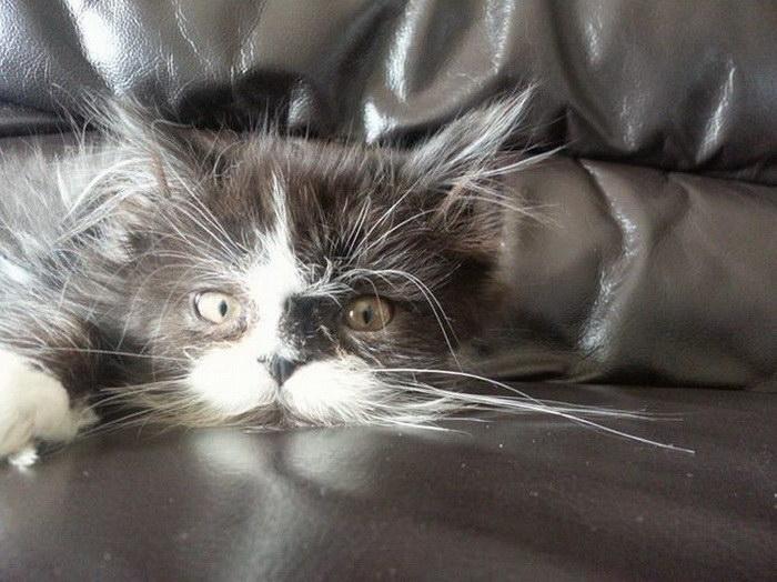 Дьявольский кот Атчоум
