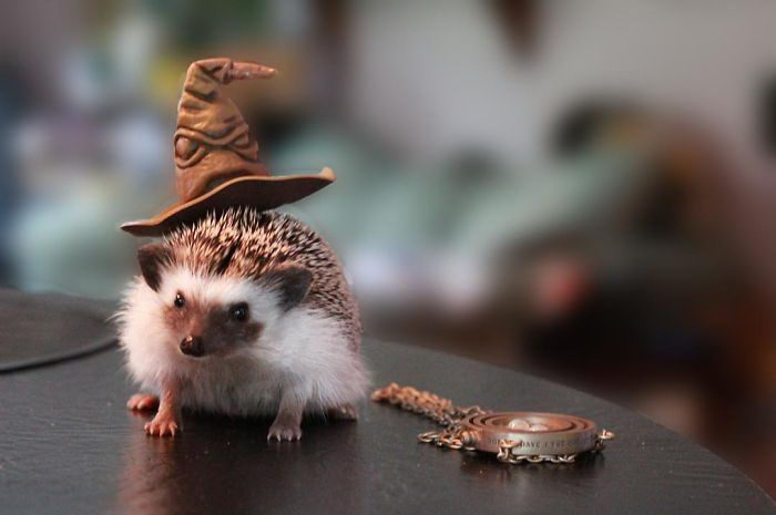 15 фотографий ежиков в шляпках