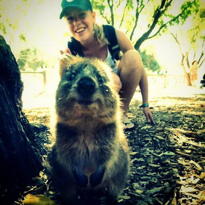 Селфи с квоккой — новый австралийский
