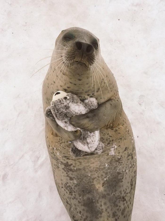 Тюленю подарили тюленя: очень милые фото!