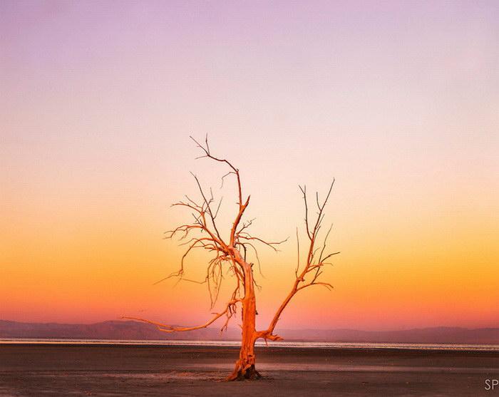 Природа в фотографиях Stuart Palley