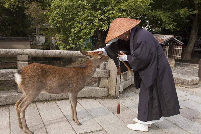 Нара — город оленей