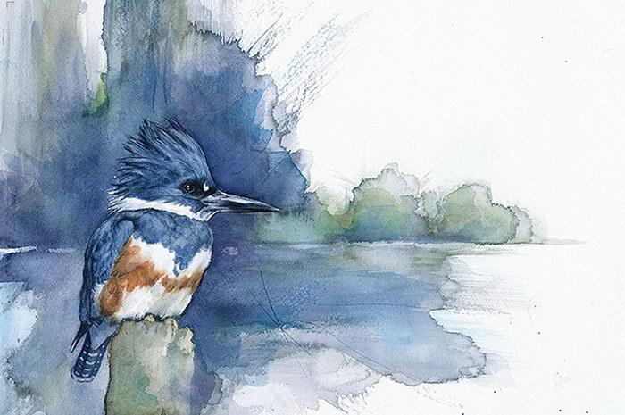 Птицы в рисунках Anne Balogh