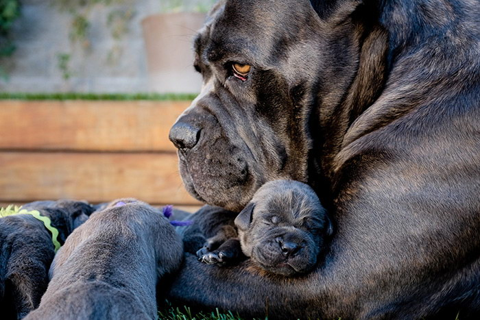 25 собак со своими щенками