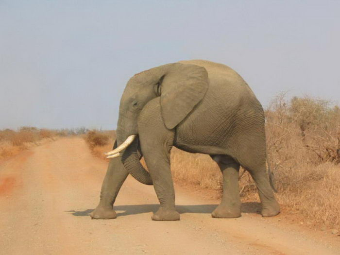 Животные без шеи: юмор из Интернета
