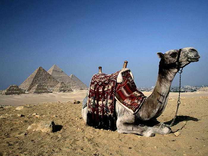 Бархатный сезон на территории Египта