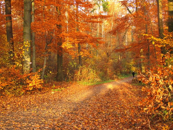 золотая осень фото природа