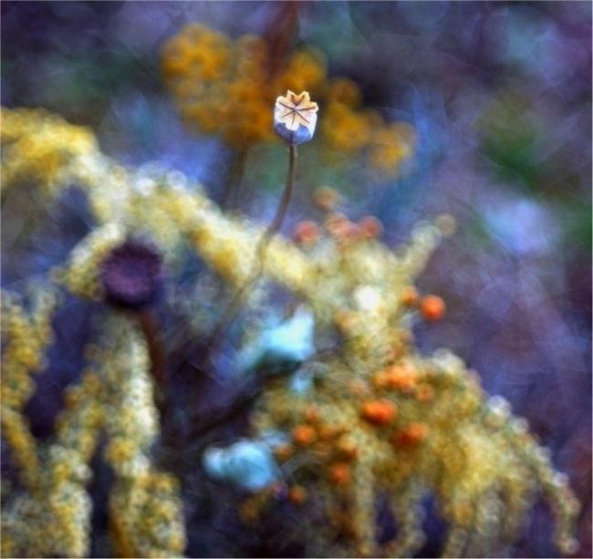 Невероятные макро-фото природы от Магдалены Васичек