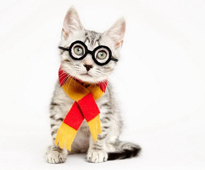 Шляпки для кошек: проект Shaina Fishman