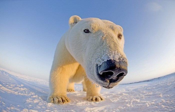 животные северного ледовитого океана