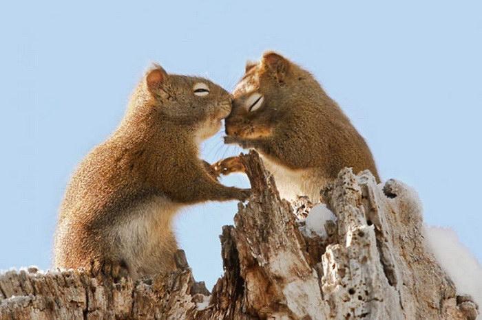 27 доказательств любви в мире животных