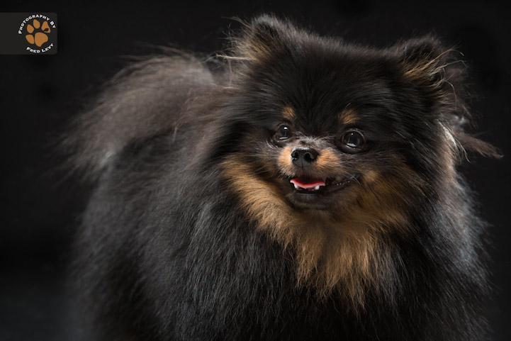Черные собаки в фотографиях Fred Levy