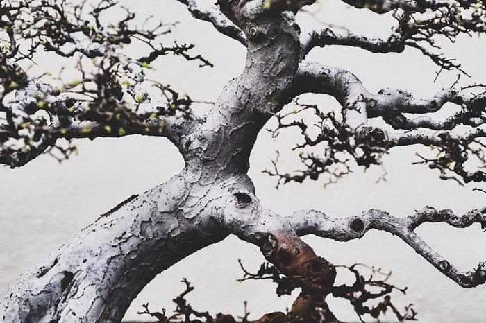 Изящество бонсаев в фотографиях Stephen Voss
